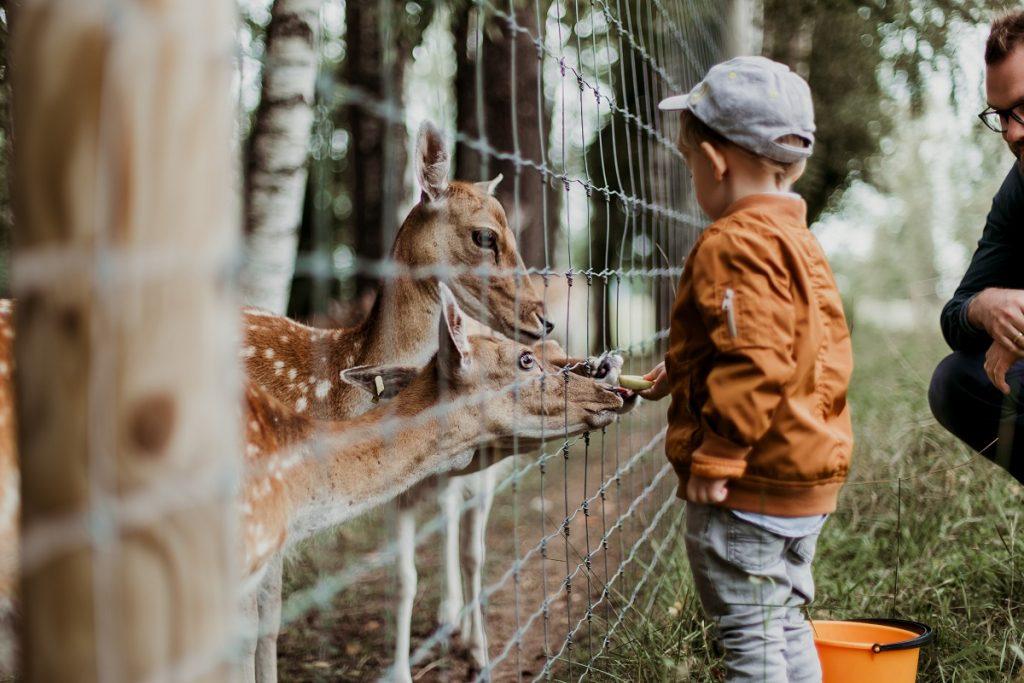 child at Elmwood Park Zoo