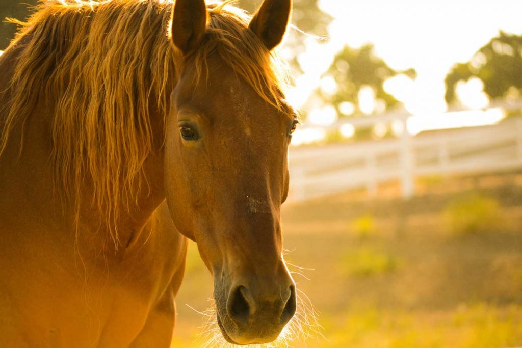 close up of brown horse in a sunny field